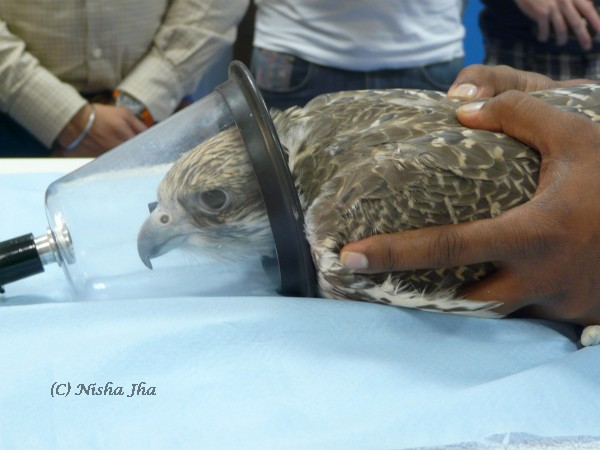 abu dhabi falcon hospital @lemonicks.com
