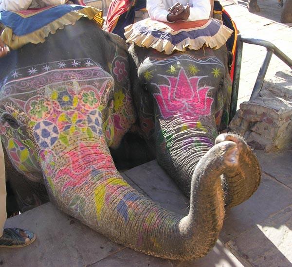 Elephants in rajasthan @lemonicks.com