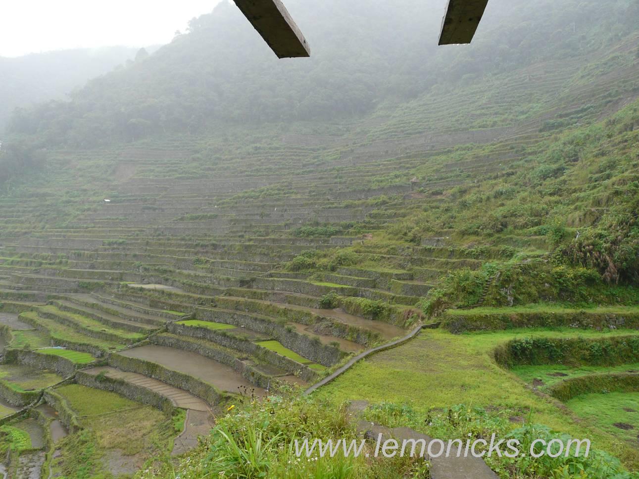 rice terrace @lemonicks.com