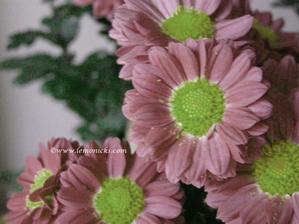 flowers@lemonicks.com