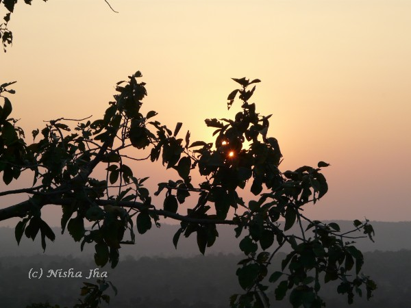 sunset kanha wildlife @lemonicks.com