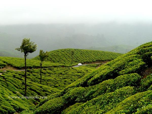 God's own country munnar tea plantation kerala @lemonicks.com
