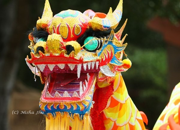 chinese new year dragon @lemonicks.com