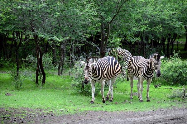 Mauritius wildlife @lemonicks.com