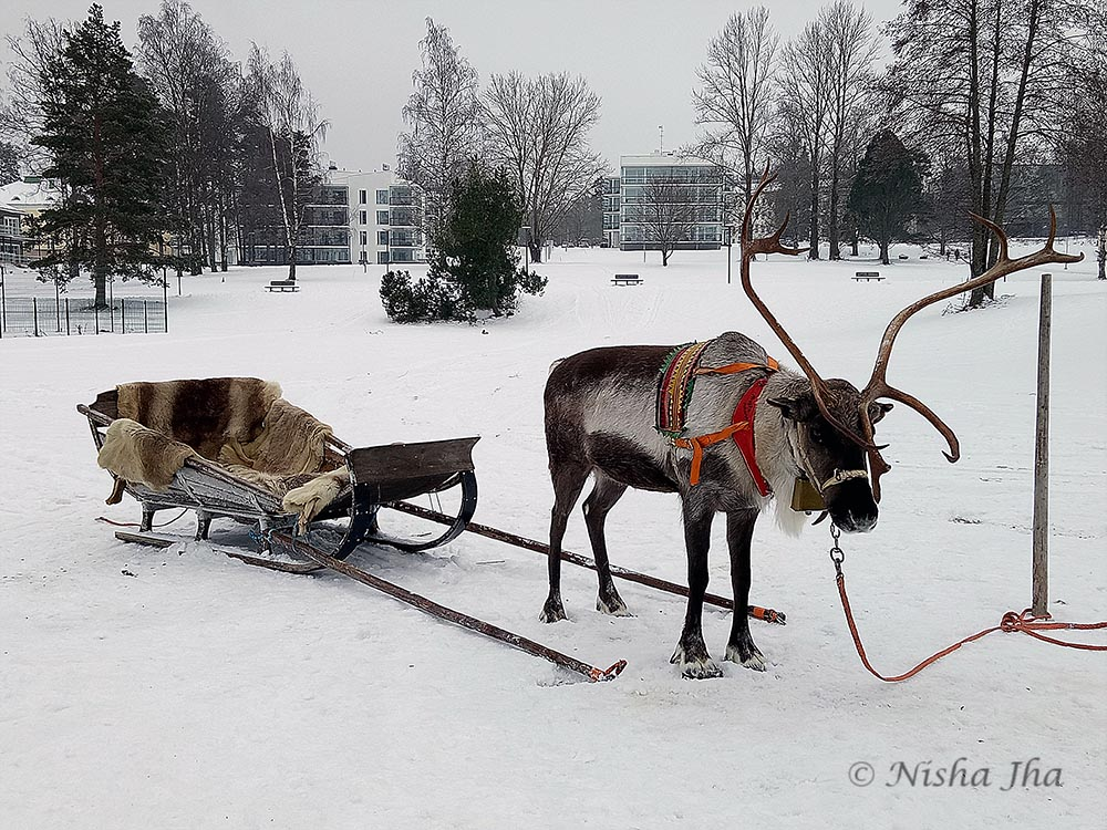 things activities saariselka lapland reindeer safari @ lemonicks.com