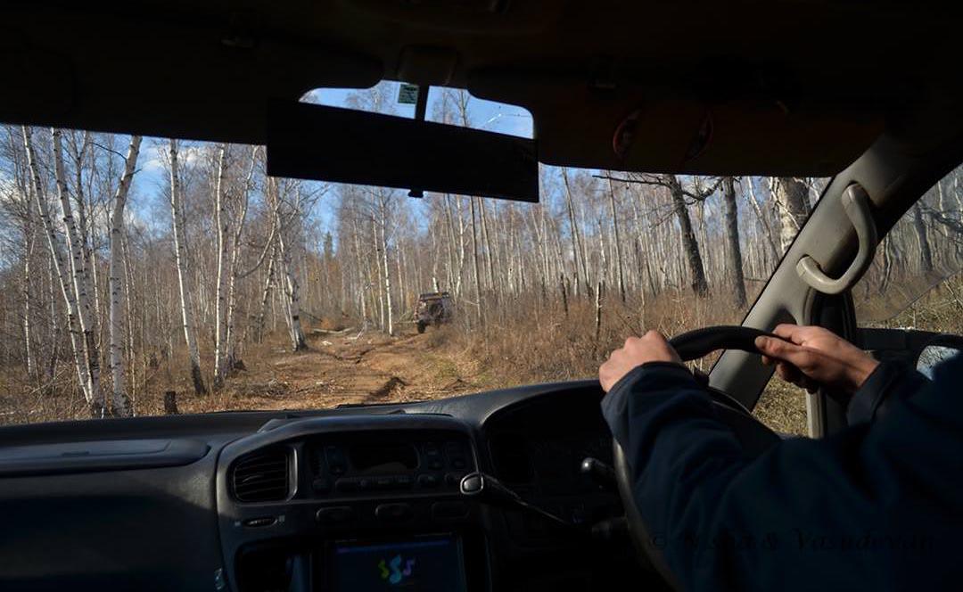 woods in siberia